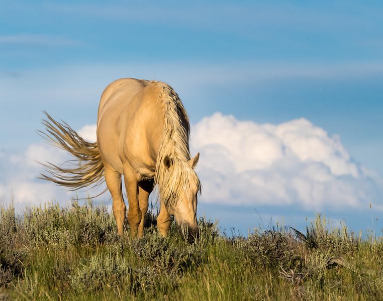 Wild Stallion Bobby