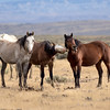 Goofy Stallions Spooky, Sandy and Coral