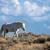 Sand Wash Basin Wild Stallion Rajun Cajun