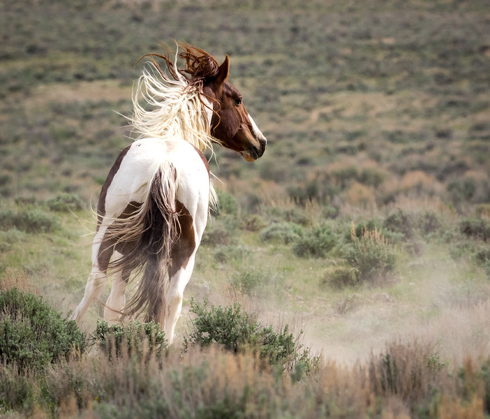 Tango on the Run and Kicking up Dust