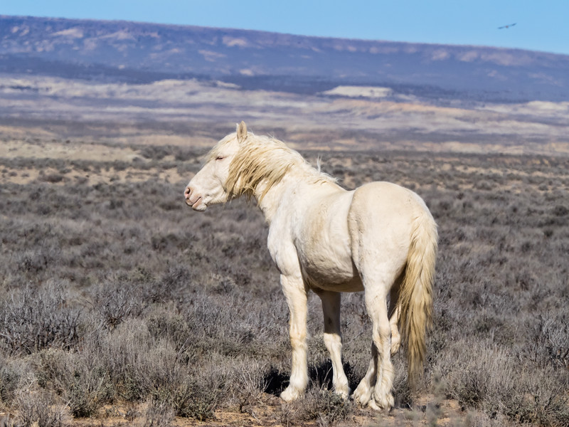Wild Stallion Tripod