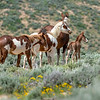 Patches, Wakinyan and new colt Geronimo with Indian Girl
