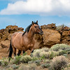 Ohitika - Wild Stallion of Sand Wash Basin