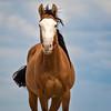 Wild Young Stallion Shappa