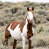 Wild Stallion Arroyo