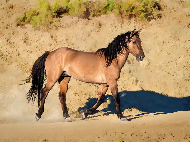 Wild Stallion Hurricane Strutting