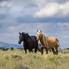 Black Mare Em with Wild Stallion Corona