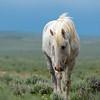 Band Stallion Glory on a Rainy Day in Sand Wash Basin