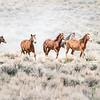 Wild Mustang Stallion Kia and His Band