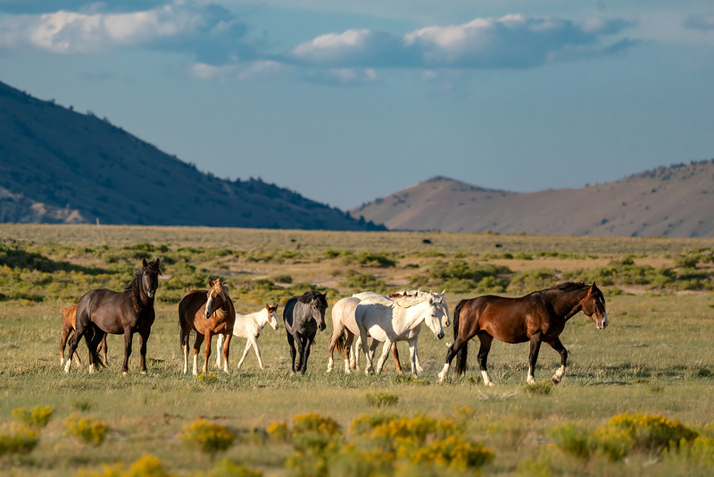 Wild Horse Family Band in Wyoming