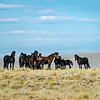 A Dark and Elusive Band of Wild Horses in Wyoming