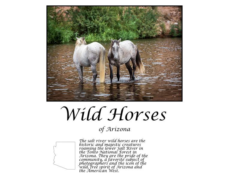 wild horses of AZ