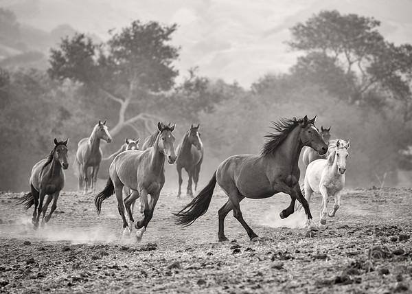 Wild Horses (1)