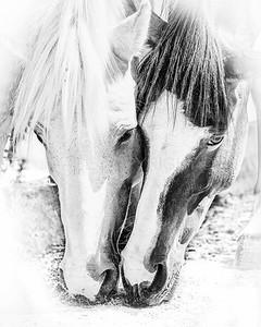 Wild Horse Love