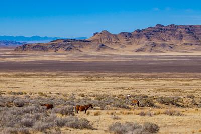 Onaqui Wild Horse Range, Utah.