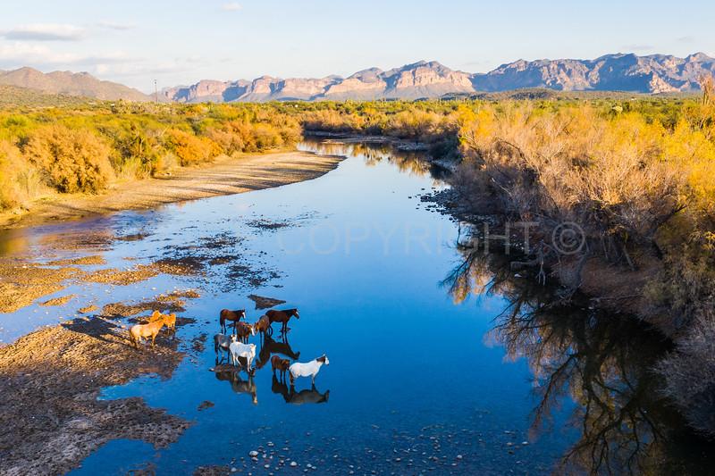 Wild Horses in the Lower Salt River