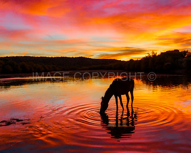 Wild Horse at Sunset over the Lower Salt River