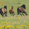 Mustangs of Mount Taylor