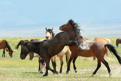 Bachelor stallions sparring