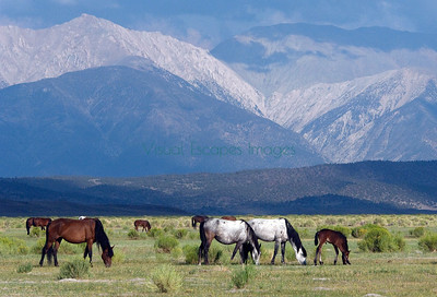 Wild horses in beautiful places