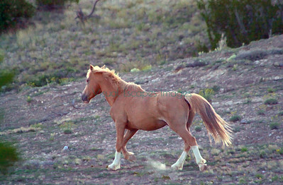 D1_12894 Palomino stallion released from another state