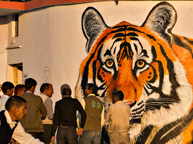 Wildlife art paintings in the first heritage Sawai Madhopur railway station in Rajasthan. These works of art were painted by a team of local artists led by masters Narayan Singh and Gajanand Singh, original members of the Ranthambhore School of Art, in an initiative suggested by Valmik Thapar and implemented by the Railway ministry and WWF-India.