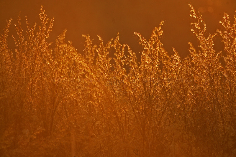 Grassland in Golden light