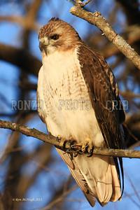 Hawk 2010-081a
