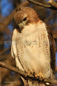 Hawk 2010-059a