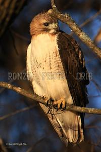 Hawk 2010-047a