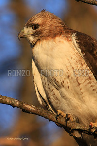 Hawk 2010-091a