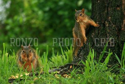 Squirrels_0502_2007-036a
