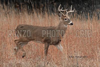 7 Point Buck 2013_1104-001