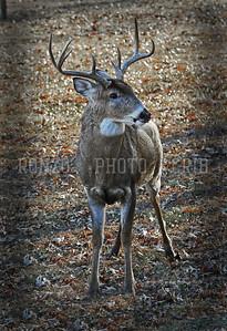 Buck 2013_1128-001