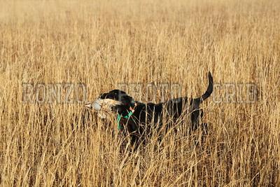 S E K  GUN DOGS 2015_0124 (34)