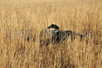S E K  GUN DOGS 2015_0124 (32)
