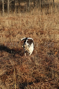 S E K  GUN DOGS 2015_0124 (14)