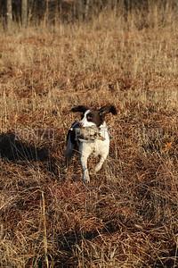 S E K  GUN DOGS 2015_0124 (15)
