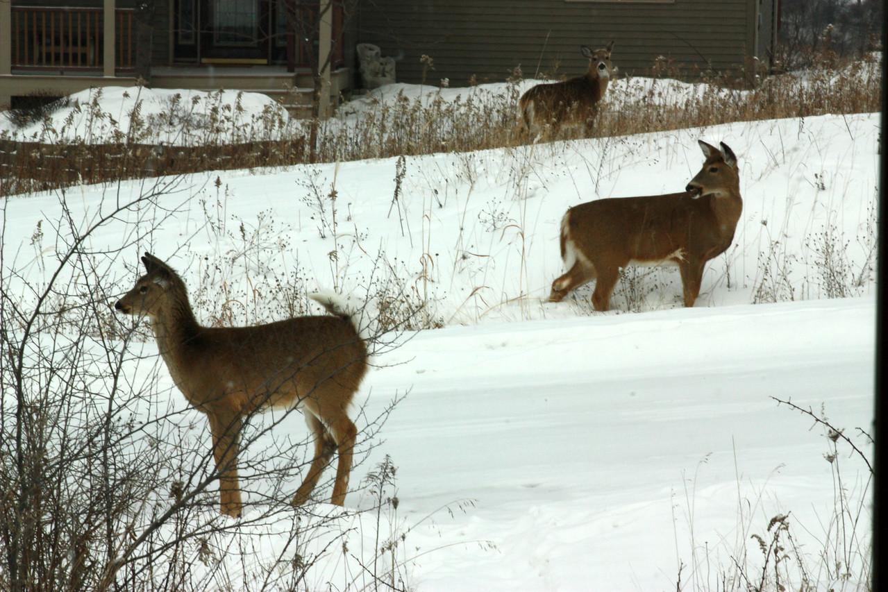 Just a few Deer