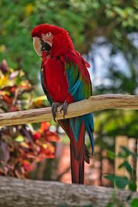 Color coordinating quacker