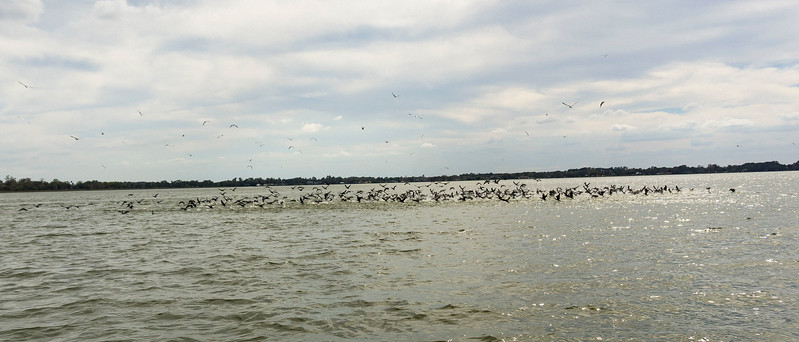 Flock of Birds over Water