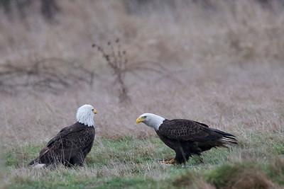 Eagles Debate