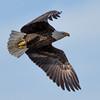 Eagle determination