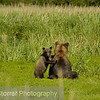 Grizzly Bear w/Cubs