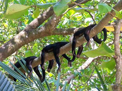 Hangin' out in Costa Rica! Pura Vida!