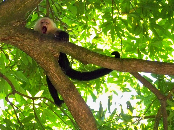 In the shade of the mango tree is a great place for a nap!