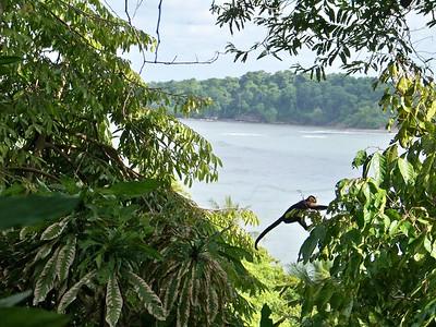 Ocean view living, capuchin monkey style. Punta Burica/Isla Burica, Panama.