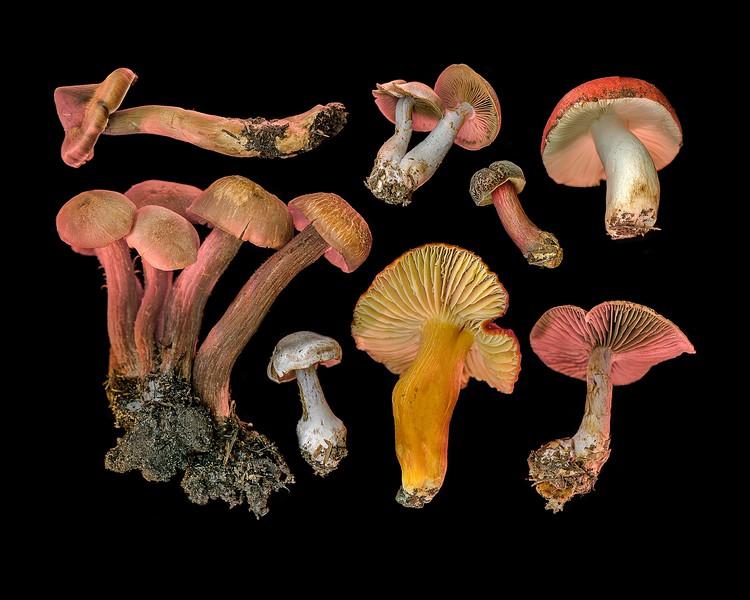 Wild Mushroom Medley # 33