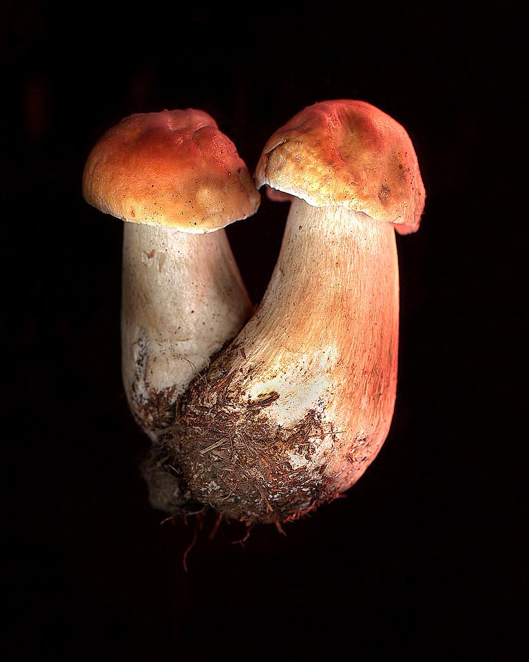 Porcini Twins