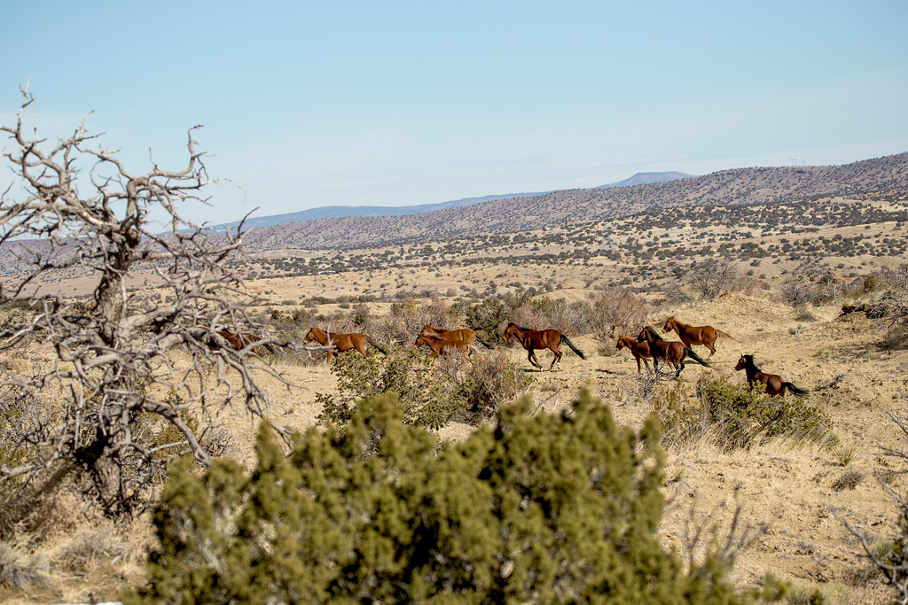 City of dust: Hagan New Mexico Wild Mustangs